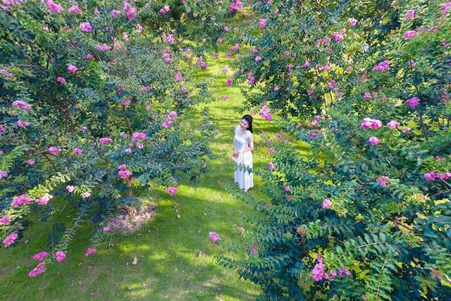 """Phát """"sốt"""" với những con đường hoa đẹp như trời Tây ngay gần Hà Nội - 11"""