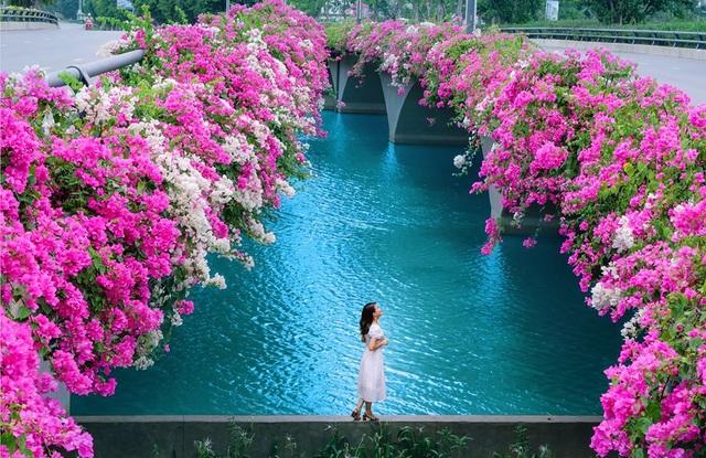 """Phát """"sốt"""" với những con đường hoa đẹp như trời Tây ngay gần Hà Nội - 5"""