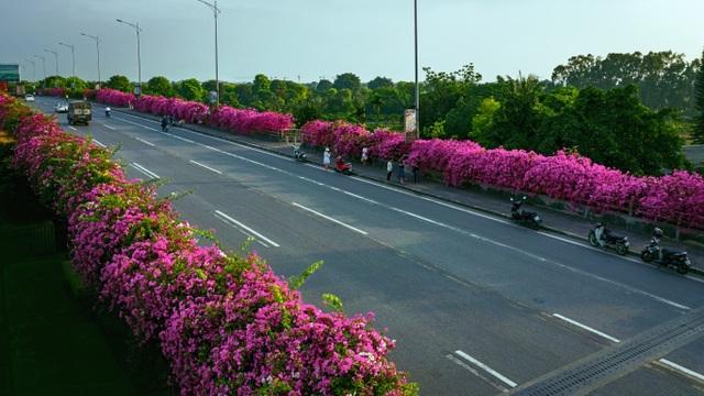 """Phát """"sốt"""" với những con đường hoa đẹp như trời Tây ngay gần Hà Nội - 1"""