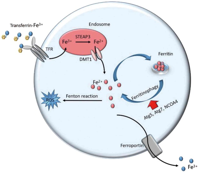 Phát hiện loại chất béo có thể tiêu diệt tế bào ung thư - 2