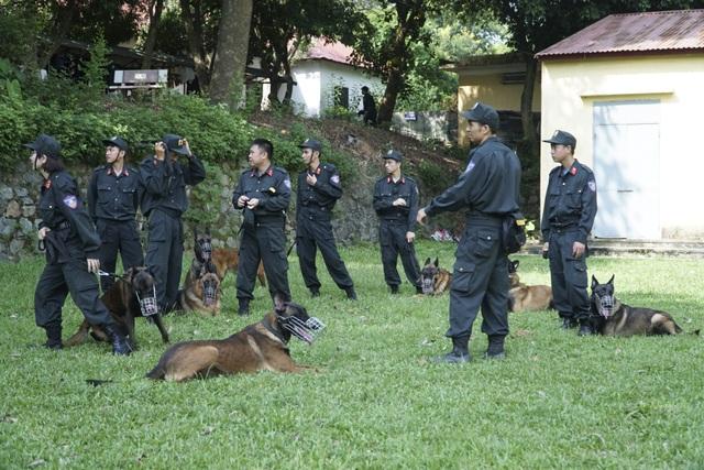 Chiêm ngưỡng khả năng đặc biệt trong trấn áp tội phạm của chó nghiệp vụ - 1