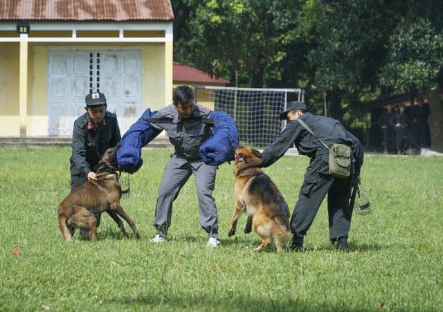 Chiêm ngưỡng khả năng đặc biệt trong trấn áp tội phạm của chó nghiệp vụ - 5