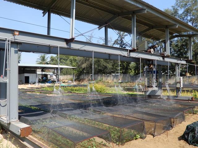 Khởi nghiệp trồng rau ở tuổi 50, bước đầu kỹ sư thu 15 triệu đồng/tháng - 1