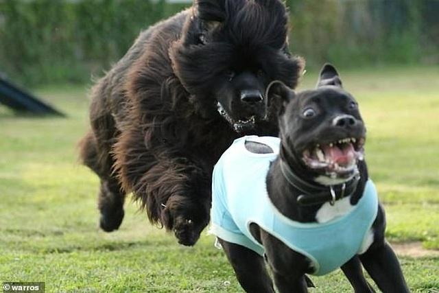 """Những tình huống """"khó đỡ của thú cưng khiến bạn không thể không bật cười - 6"""