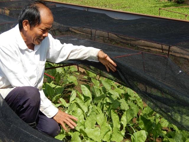 Khởi nghiệp trồng rau ở tuổi 50, bước đầu kỹ sư thu 15 triệu đồng/tháng - 3