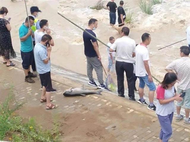 Sau mưa lũ, người dân đổ xô ra đường bắt cá - 1