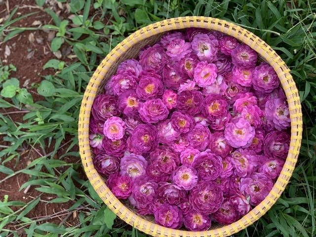 """Chi tiền tỷ mua mảnh đất ngoại ô, vợ chồng ở Sài Gòn """"trồng hoa, nuôi gà"""" - 10"""