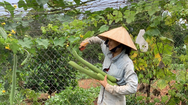 """Chi tiền tỷ mua mảnh đất ngoại ô, vợ chồng ở Sài Gòn """"trồng hoa, nuôi gà"""" - 17"""