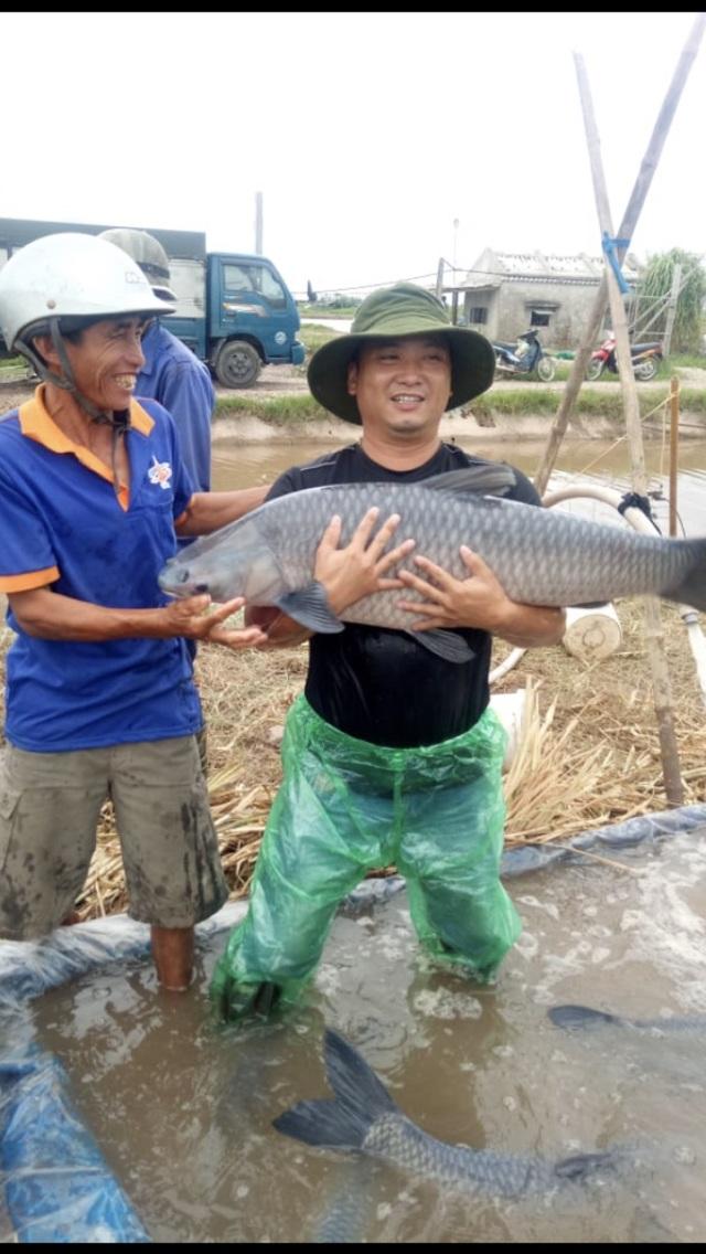 Ao cá khủng nuôi toàn cá trắm đen siêu to khổng lồ, doanh thu 6-7 tỷ đồng/năm - 2