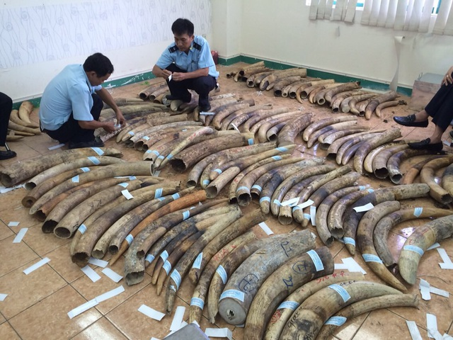 48 năm tù cho 4 đối tượng vi phạm liên quan đến động vật hoang dã - 1