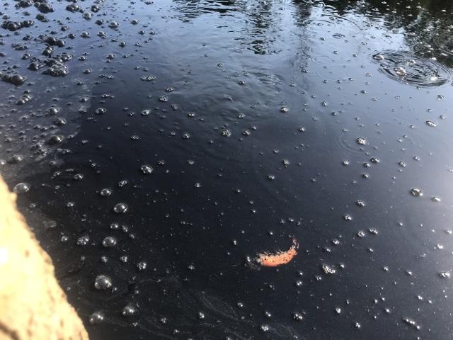 Hình ảnh kinh hoàng hồ nuôi tôm xả nước thải đen ngòm bức tử cả bãi biển - 2