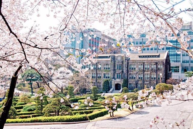 Du học Hàn Quốc liệu có phải điểm đến lý tưởng của hậu Covid? - 4