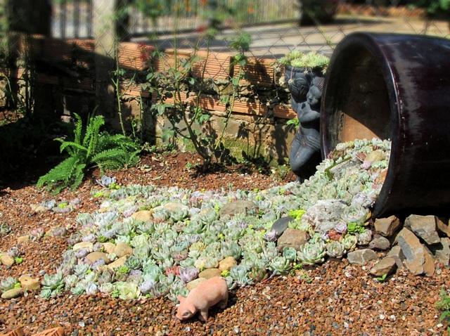 Vợ chồng trẻ rủ nhau bỏ phố về quê, làm vườn đẹp mê chỉ hết 1 triệu đồng - 3