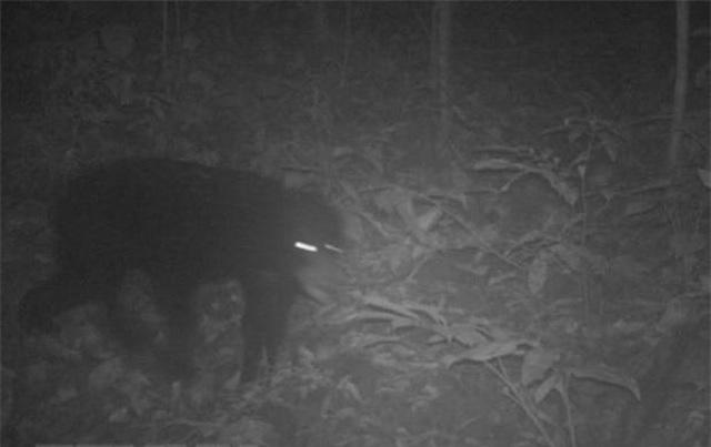 Phát hiện 2 loài động vật quý hiếm thuộc Danh lục Đỏ thế giới tại Thanh Hóa - 1