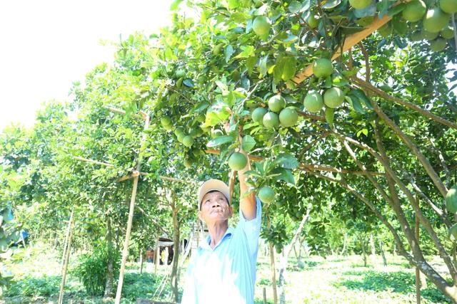 Quảng Nam: Vươn lên thoát nghèo nhờ Tổ hợp tác trồng cây ăn quả - 3
