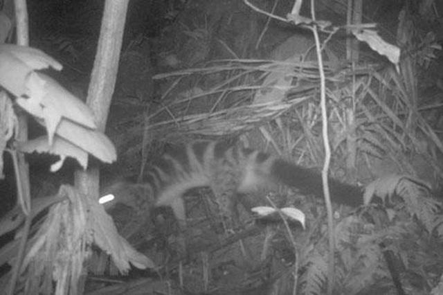 Phát hiện 2 loài động vật quý hiếm thuộc Danh lục Đỏ thế giới tại Thanh Hóa - 2
