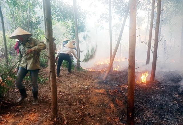 Hơn 300 người căng mình chữa cháy rừng thông - 1