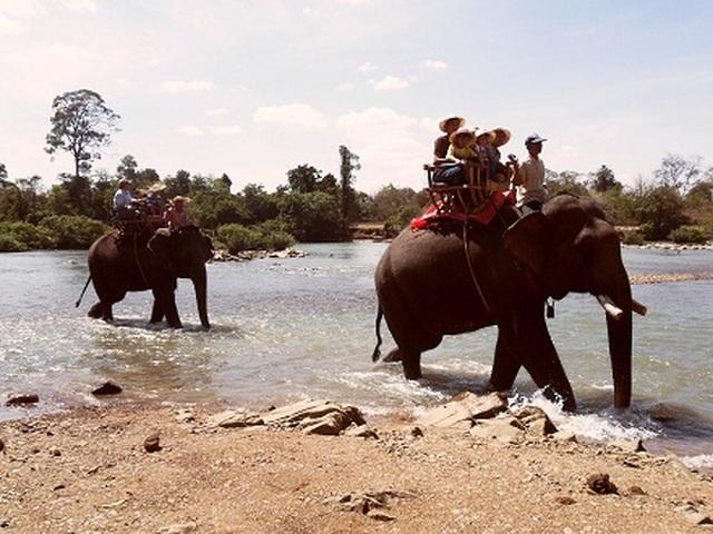 Nữ du khách gãy 4 xương sườn, gãy tay khi cưỡi voi ở Tây Nguyên - 1