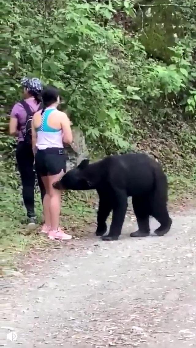 """Thót tim cảnh gấu đen bất ngờ cùng chụp """"tự sướng với du khách - 2"""