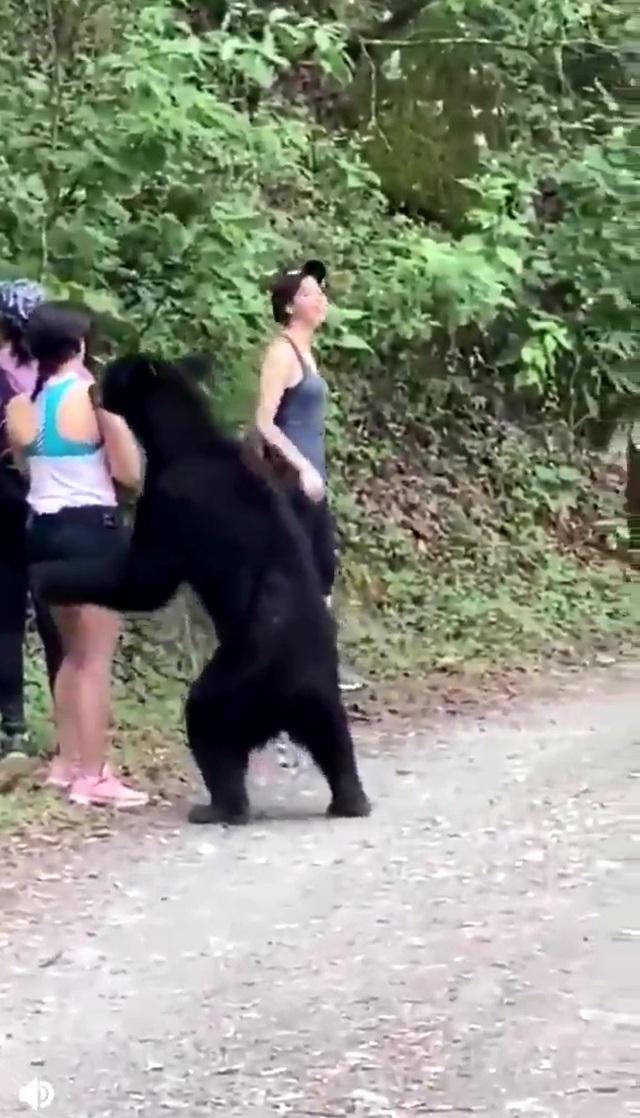 """Thót tim cảnh gấu đen bất ngờ cùng chụp """"tự sướng với du khách - 3"""