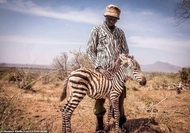 Bức ảnh kể về sự tồn tại khắc nghiệt trong thế giới tự nhiên - 1