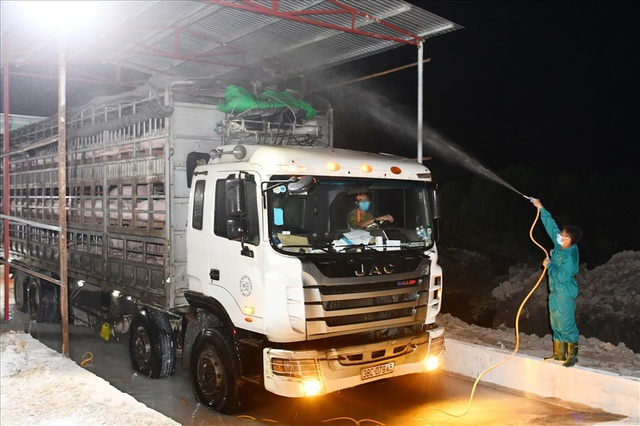 Nhập khẩu lợn Thái Lan về không có lãi, doanh nghiệp muốn bỏ cuộc - 1