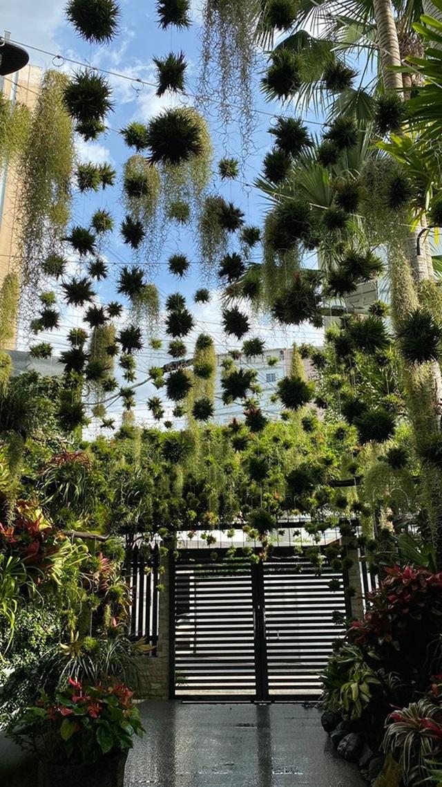 Mê mẩn khu vườn tiên cảnh rộng 300m2 toàn cây đắt đỏ của mẹ đảm ở Cần Thơ - 7