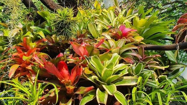 Mê mẩn khu vườn tiên cảnh rộng 300m2 toàn cây đắt đỏ của mẹ đảm ở Cần Thơ - 4