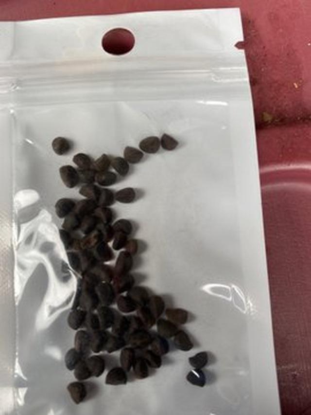 Mỹ điều tra vụ việc nhiều người nhận được hạt giống bí ẩn từ Trung Quốc - 2