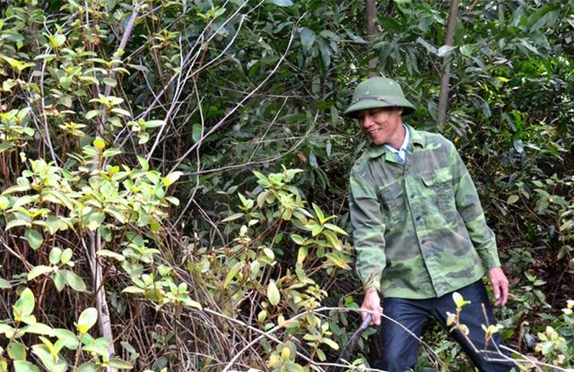 """Sau 30 năm bền bỉ """"rót"""" mồ hôi xuống rừng hoang, cựu binh thành tỷ phú - 1"""