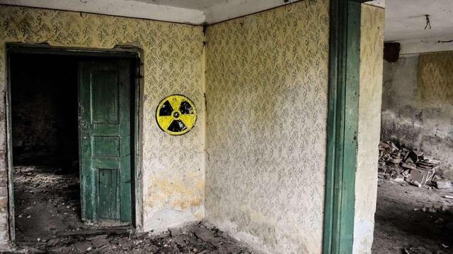 """Nấm ở Chernobyl có thể được sử dụng làm """"lá chắn bức xạ"""" trong không gian - 1"""