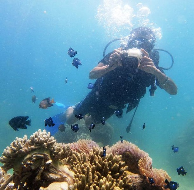 Lặn biển, ngắm san hô - điểm đến hút khách của du lịch ở Bình Định - 7