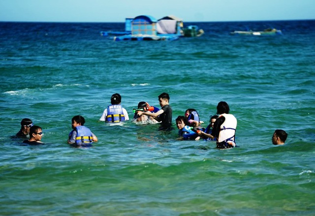 Lặn biển, ngắm san hô - điểm đến hút khách của du lịch ở Bình Định - 4