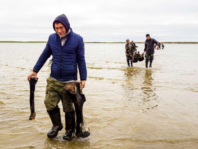 Băng tan tại Bắc Cực để lộ hài cốt voi ma mút 10.000 tuổi - 4