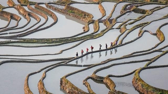 Món chè của Việt Nam trong 22 khoảnh khắc văn hóa - du lịch của thế giới - 13