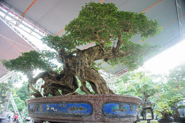 Mãn nhãn với cây găng tu hú, gỗ lũa tự thân hàng trăm năm tuổi - 8