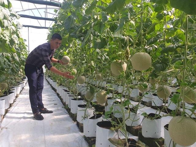 Hà Tĩnh: Thanh niên 8X bỏ túi nửa tỷ đồng một năm từ nghề trồng dưa - 5