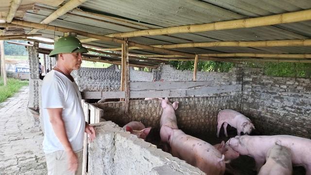 Hà Nội: Cấm chăn nuôi trong nội thành, người dân chuyển nghề ra sao? - 1