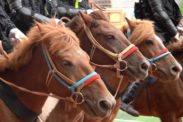 Diện mạo mới lạ của Đoàn cảnh sát cơ động kỵ binh  - 2