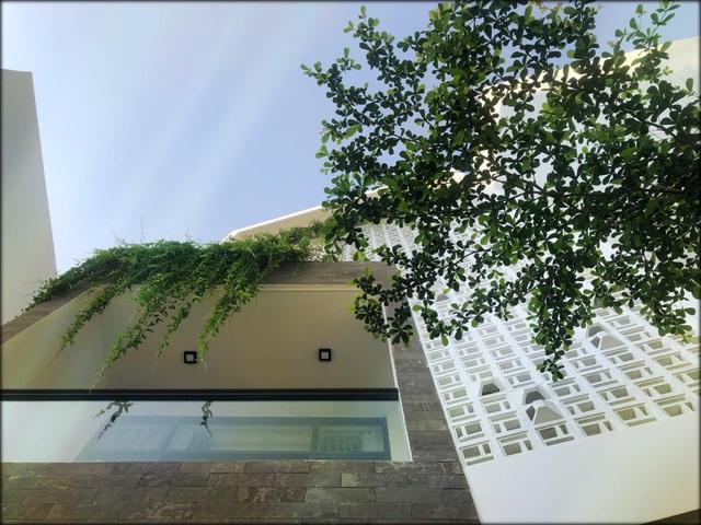 """Vợ chồng trẻ ở Đà Nẵng xây nhà 3 tỷ đồng """"ngập cây xanh và ánh nắng"""" - 1"""
