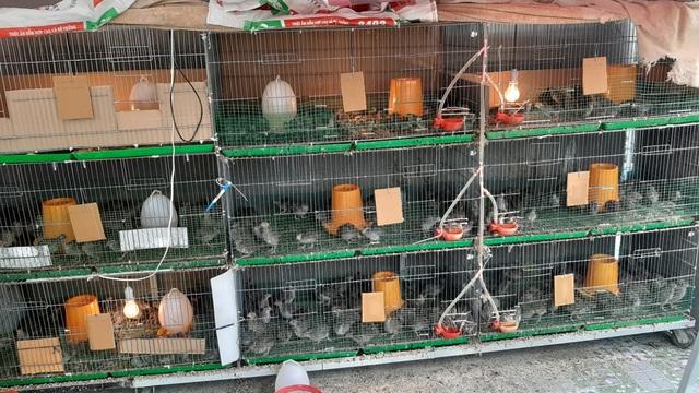 Hoa trái xum xuê, gà vịt đẻ trứng trên nông trại sân thượng nhà ở Sài Gòn - 3