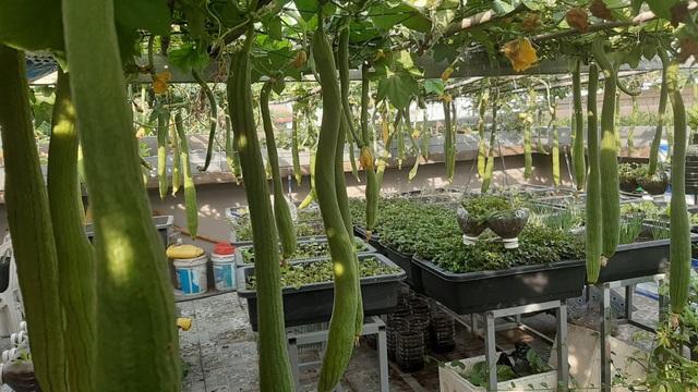 Hoa trái xum xuê, gà vịt đẻ trứng trên nông trại sân thượng nhà ở Sài Gòn - 6