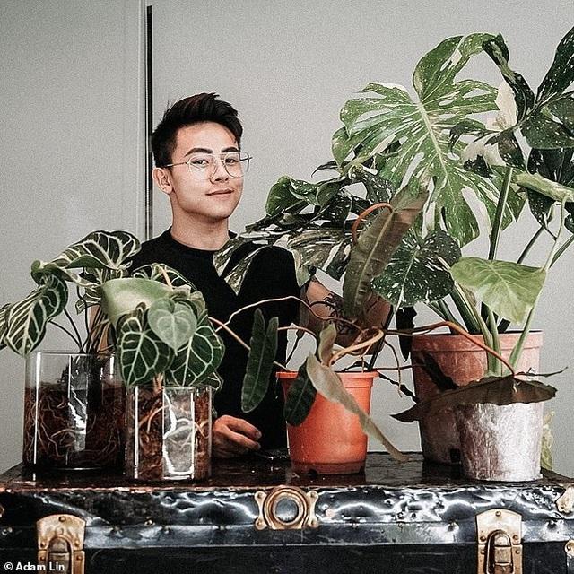 Không gian sống của người đàn ông sở hữu số cây trị giá hơn 1 tỷ đồng - 7