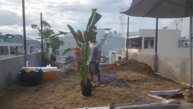 """Ông bố 2 con ở Đà Nẵng """"làm vườn, nuôi cá"""" đẹp mê trên sân thượng nhà phố - 3"""