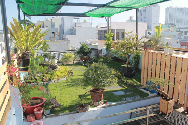 """Ông bố 2 con ở Đà Nẵng """"làm vườn, nuôi cá"""" đẹp mê trên sân thượng nhà phố - 4"""
