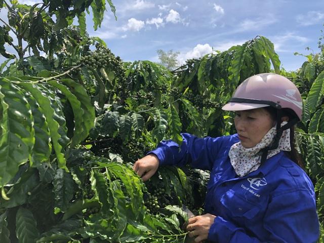 Vợ chồng nông dân mày mò làm cà phê sạch, kiếm hơn 1 tỷ đồng/năm - 1