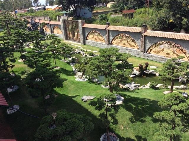 Vườn tùng bạc tỷ rộng 1500m2 trong khuôn viên biệt thự ở Buôn Mê Thuột - 1