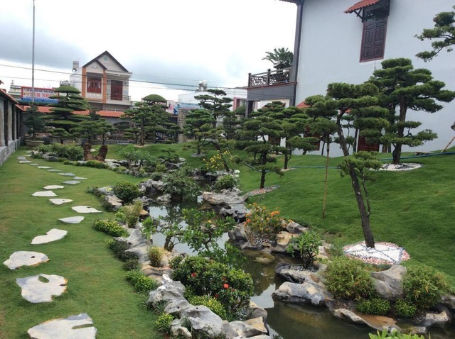 Vườn tùng bạc tỷ rộng 1500m2 trong khuôn viên biệt thự ở Buôn Mê Thuột - 6