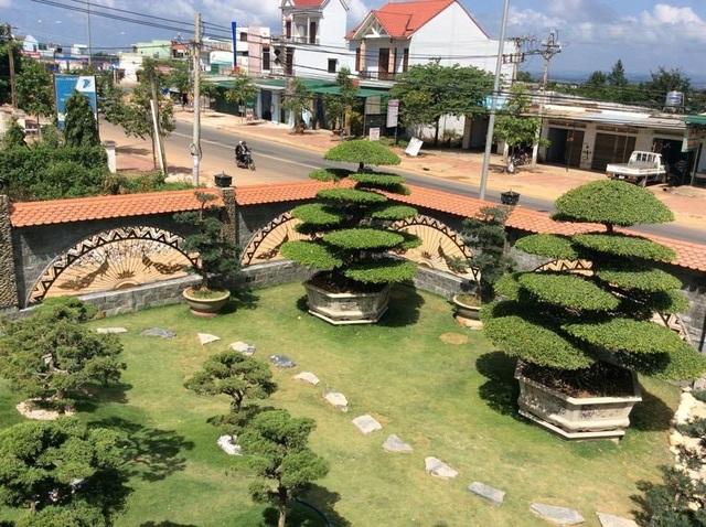 Vườn tùng bạc tỷ rộng 1500m2 trong khuôn viên biệt thự ở Buôn Mê Thuột - 7