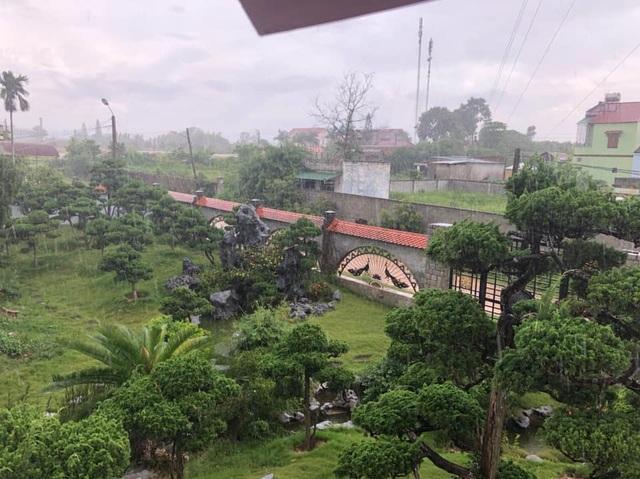 Vườn tùng bạc tỷ rộng 1500m2 trong khuôn viên biệt thự ở Buôn Mê Thuột - 9